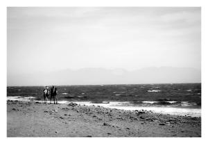 camels beach egypt