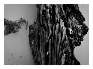 driftwood koh lanta