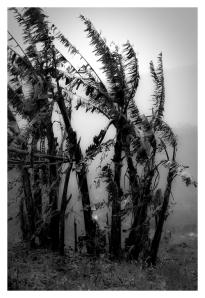 palmen laos